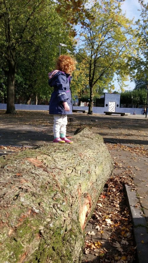 maple Schimmeplein with child
