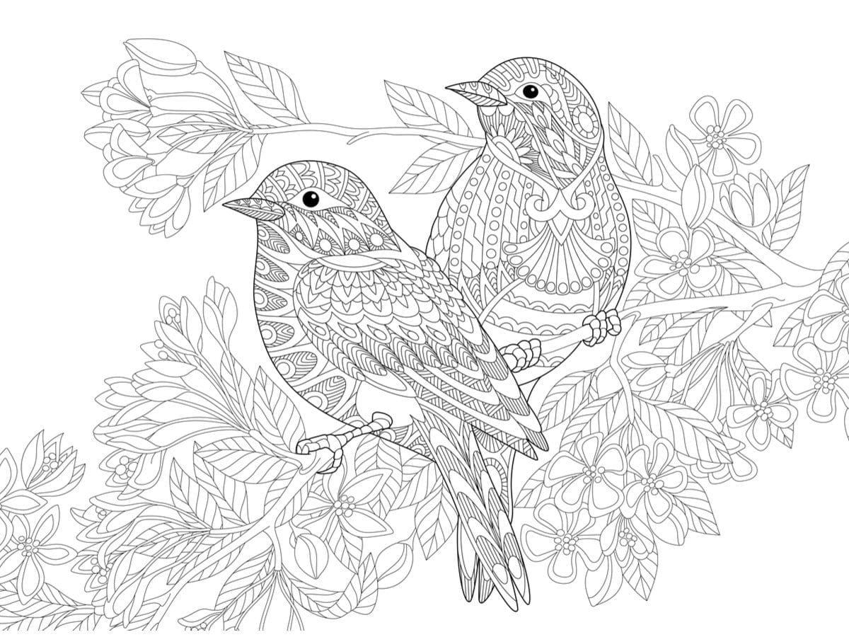 14. Birds in fine lines
