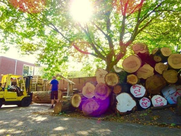 Tafelboom Utrecht