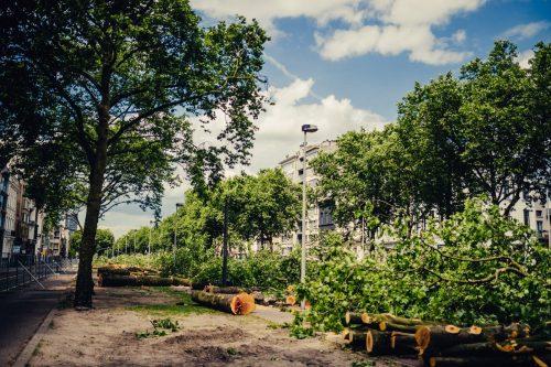 Platanen stadshout Antwerpen